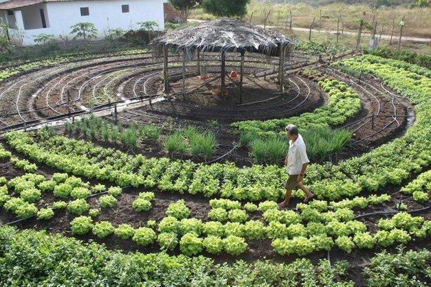 Alimentos orgánicos en Dinamarca